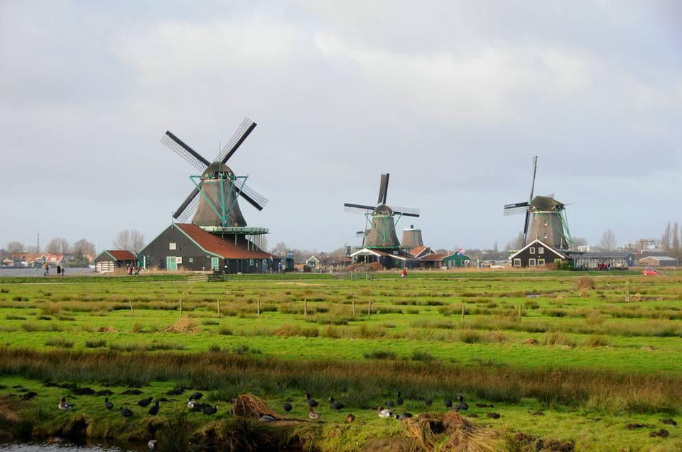 7.20附篇荷兰1.jpg